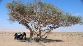 Oman_Nizwa.jpg